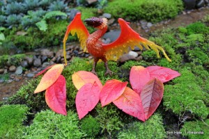 Safari Phoenix with Fall blueberry leaves 1